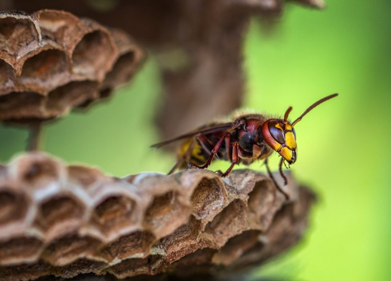 Wasp on plant